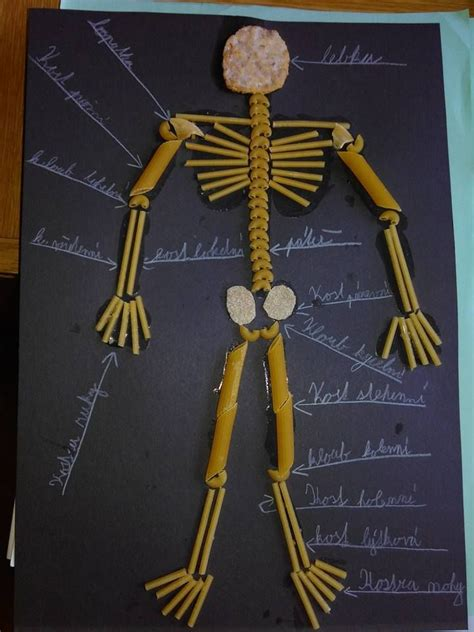 How To Make A Human Skeleton Out Of Paper - 17 best images about telo on coloring human