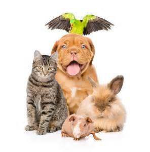 Pet Sitting Pet Sitting Houston Area Pet Sitting Services