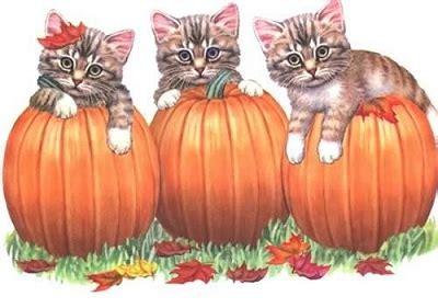 diarrhea pumpkin is pumpkin for diarrhea in cats