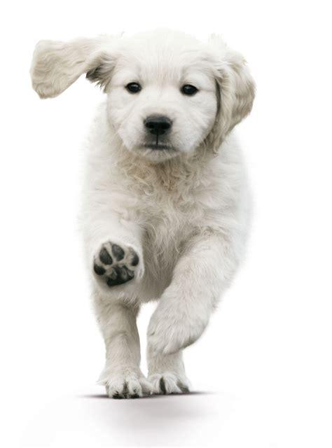 puppy pup puppy consult delta dierenartsen