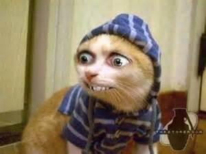 chat sans oreille xxxxoooo kikoo vous voici sur mi