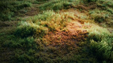 zbrush grass tutorial using particles in blender to create a grass field