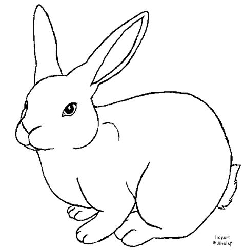 how to draw rabbit outline