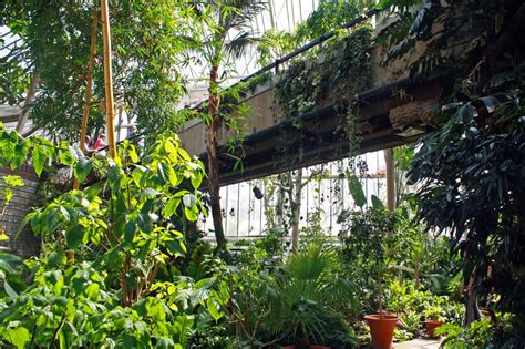 barbican conservatory  tropical jungle  london