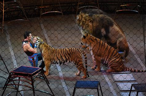 tiger 3 act a 0230475477 circus tiger shot and killed near eiffel tower sparks outrage in paris