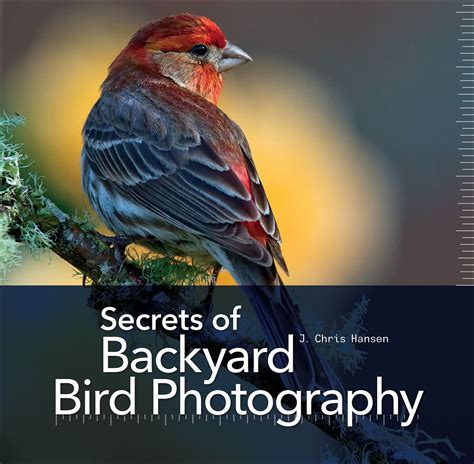 backyard bird photography secrets of backyard bird photography