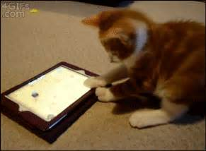 Funny cats part 65 35 pics 10 gifs funny cat gifs cat gifs