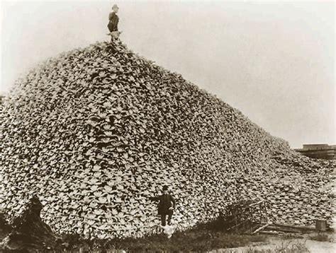 bison buffalo cartridges