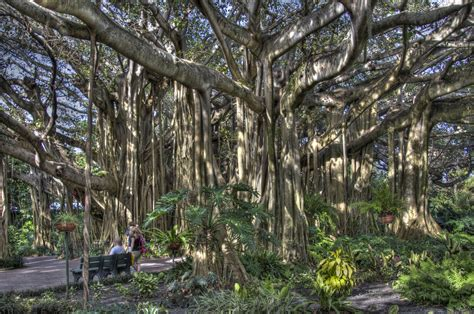 Cypress Gardens Florida by Images