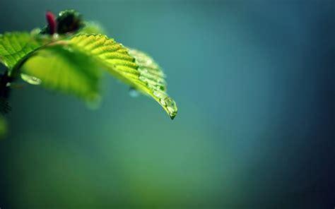imagenes para pc naturaleza fondos de naturaleza wallpapers