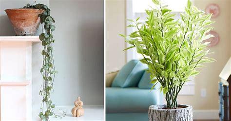 shade tolerant succulents  grow   grows