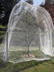 keep birds out of fruit trees netting around tree to keep squirrels out