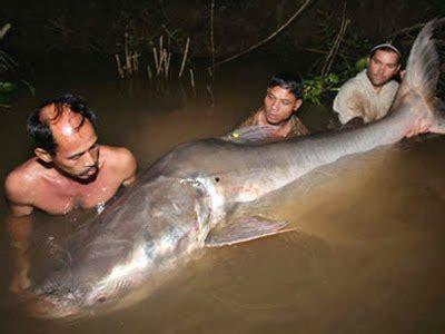 Terpal Gajah Dunia aneka informasi kita maret 2011