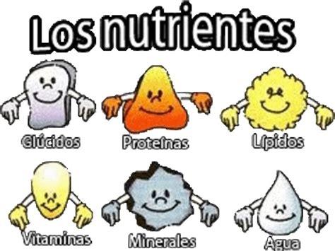 proteinas y minerales los nutrientes la nutrici 243 n y la salud
