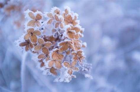 winter flowers winter flower by itsiko on deviantart
