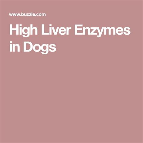 liver enzymes high 17 best images about and cat on for dogs pets and diabetic food