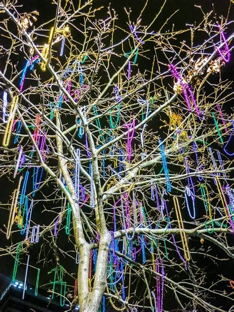 mardi gras bead tree a history of mardi gras then 1856 and now 2013