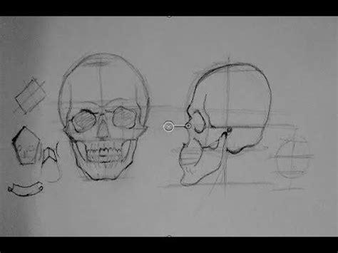 drawing human anatomy head proportions   draw