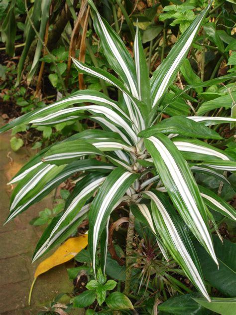 good low light houseplants plants flowers 187 low light plants