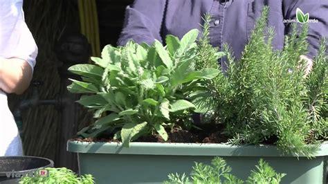 l orto in terrazzo l orto in terrazzo tutorial piante aromatiche