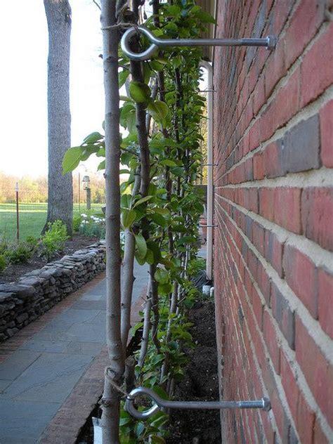 wire trellis images  pinterest gardening