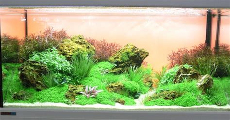 Amano Aquascaping Stichling Norderstedt E V Aquaristik Mit Spa 223 Aquascaping