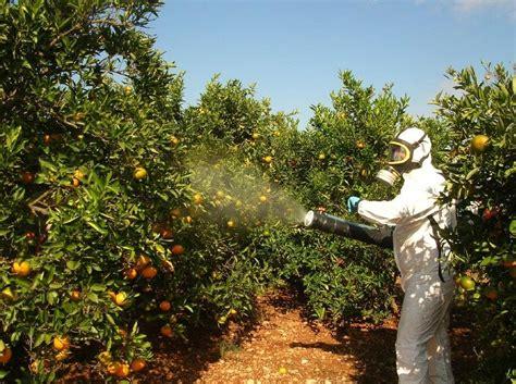 imagenes de insecticidas naturales control de plagas en sanidad ambiental hay que tener el