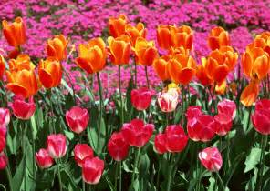 Spring Flowers Pictures Flower Meadow Spring Photo 22177541 Fanpop