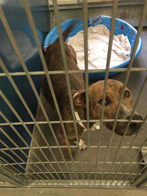 maricopa county shelter outrage at maricopa county shelter in spaying term dogs pet rescue