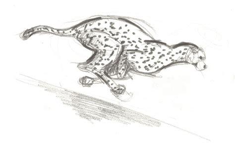 sketchbook cheetah speed sketch cheetah by wiirus on deviantart