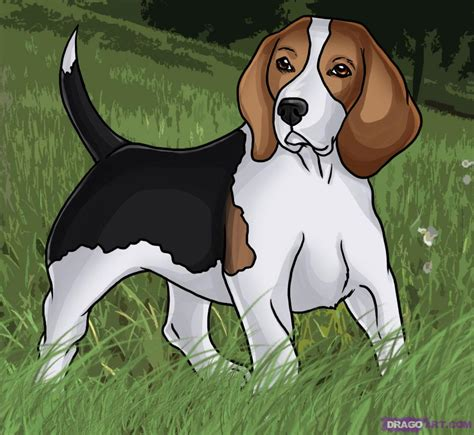 how to a beagle how to draw a beagle step by step pets animals free drawing tutorial added