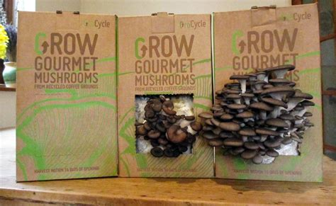 Fertile Grounds: Coffeemaker Reuses Spent Beans to Grow Edible Mushrooms