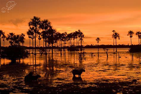 imagenes de paisajes llaneros la fantasia del llano el llano todo aquel que es buen