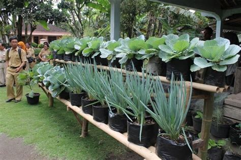 Bibit Tanaman Hidroponik 1000 images about tanaman on gardens vegetables and pots