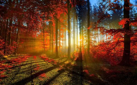 nature in twilight budsofjasmine