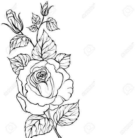 simple rose tattoo outline tattoos outline search