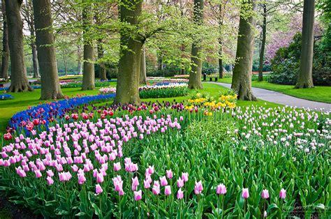 tulip flower garden keukenhof tulip garden1 jpg alison cornford matheson