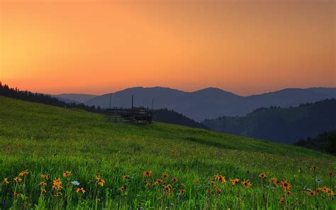 landscaping hills romania hills sunset field flowers landscape wallpaper