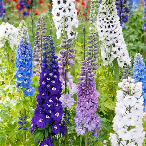 Lilac Flower by Delphinium Magic Fountains Mix Seeds