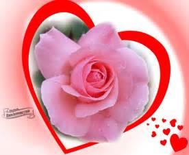 imagen rosas hermosas imagui