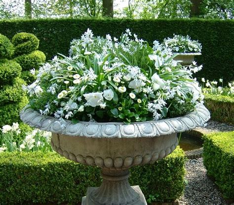 White Plant Containers Simple Container Filled With Blooming White Bulbs