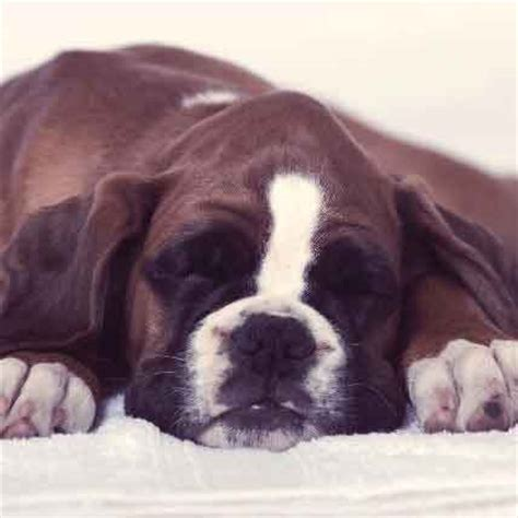 bowel obstruction in dogs what causes a bowel obstruction in dogs
