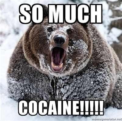 Bear Cocaine Meme - grizzly bear says so much cocaine me myself and i