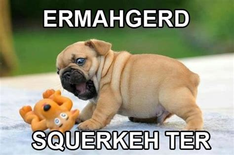 ermahgerd pug ermahgerd squerkeh ter dobrador dogs ermahgerd