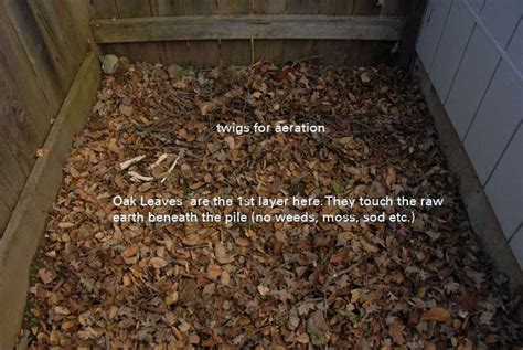 composting oak leaves create your own compost pile backyard composting