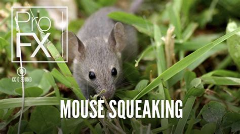 squeaky sound mouse squeaking sound effect profx sound sound effects free sound effects