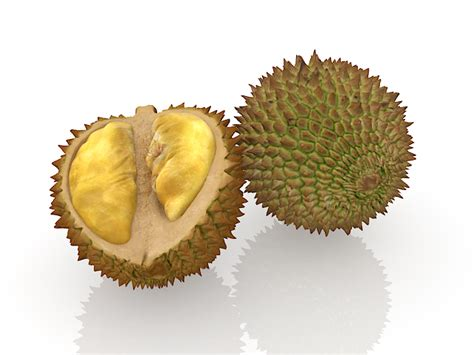 fruit with spikes durian fruit with spikes 3d model 3ds max files free
