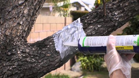 fruit tree squirrel guard 7 repel gel barrier sealant for possums squirrels and
