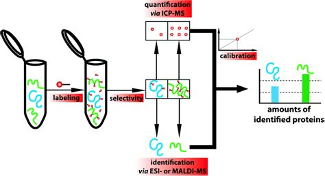 protein quantification dota based metal labels for protein quantification a
