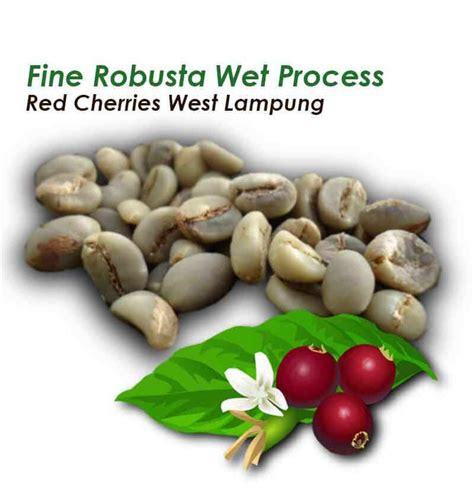 Biji Kopi Robusta Premium Petik Merah Green Bean Robusta Bengkulu 1kg biji kopi hijau mentah robusta petik merah washed